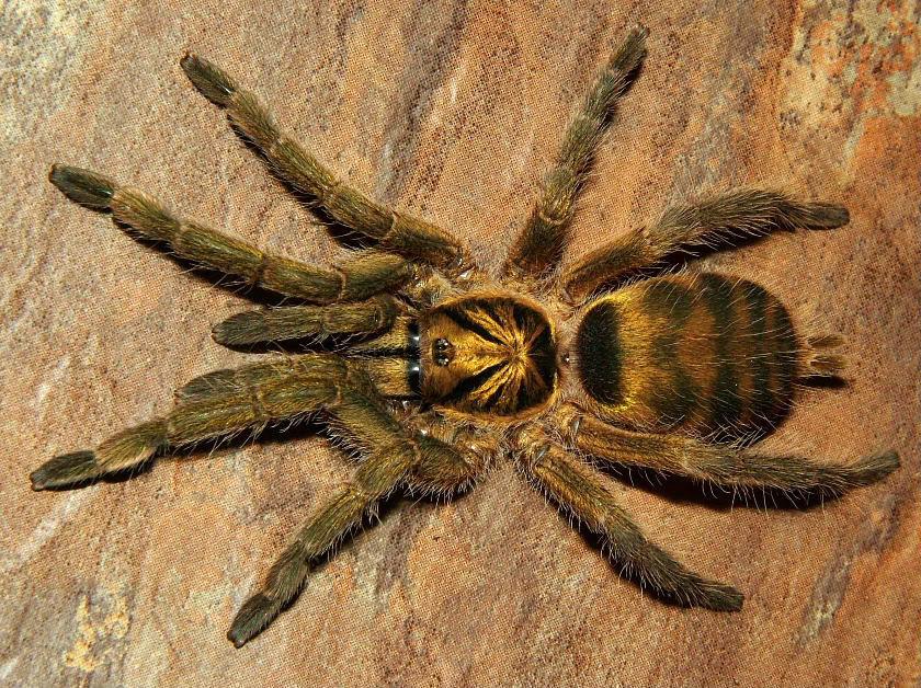 Продаю пауков и скорпионов объявление работа юриста в черкесске свежие вакансии авито